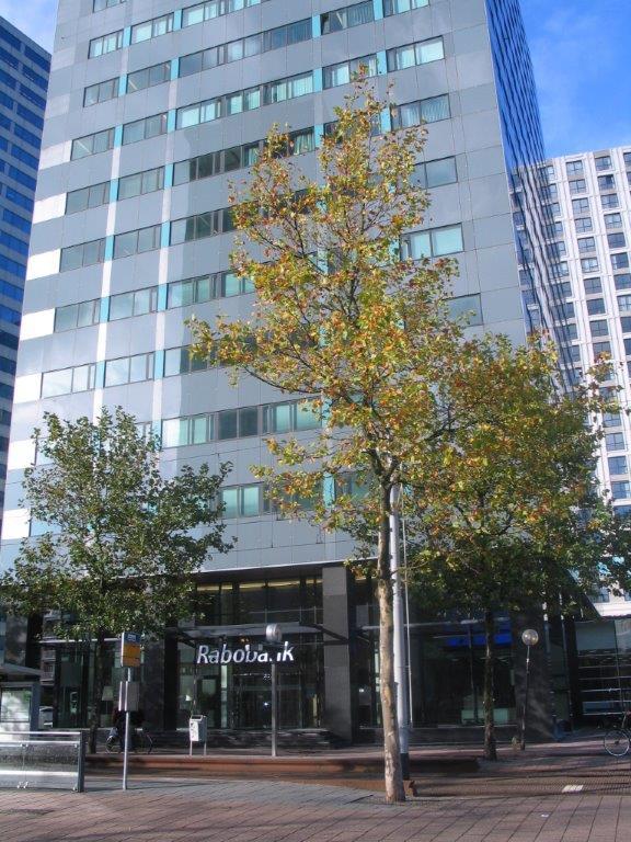Rabobank Rotterdam Pand_Blaak
